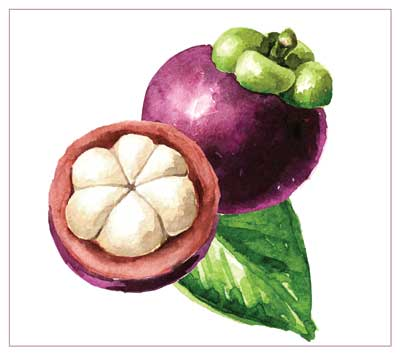 Protective Effect of Mangosteen Pericarp Extract Cream Against UVB-Induced Erythema